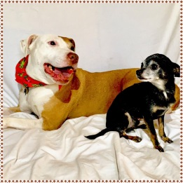 Louisa the boxer mix is a love and a perfect companion. Her little foster brother Skeeter thinks she is a gem.