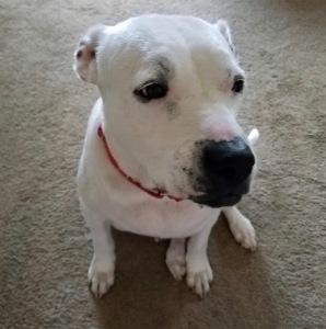 Katie (Deaf Doggy)