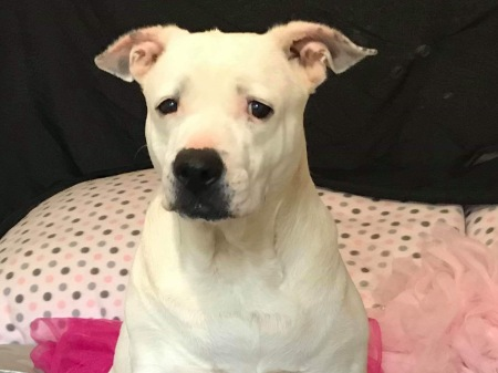 Katie is friendly as can be and loves the companionship of other dogs